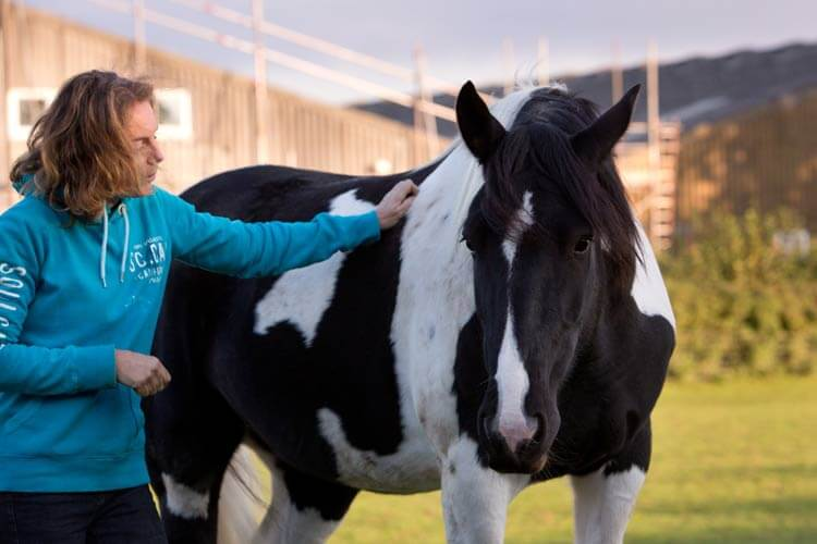 A student on an equine facilitated learning workshop, with her back to the camera, stroking a black and white horse