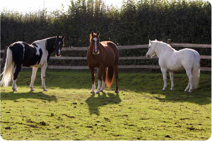image of some of the horses that inspire people during workshops inspired by eponaquest in somerset,uk