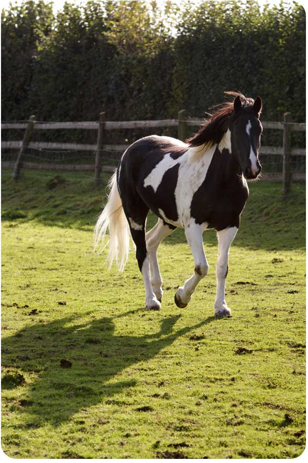 image of a happy horse running in a field during an equine facilitated learning session near Bristol uk