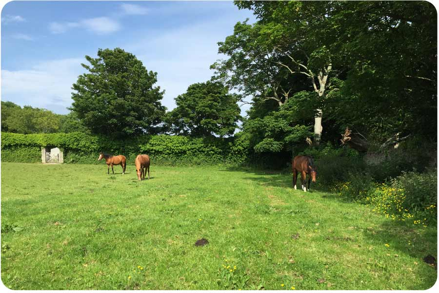 horses grazing at brickyard farm where equine facilitated learning sessions take place
