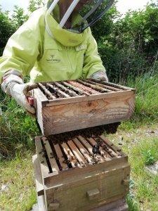 Paula holding up a box full of bees