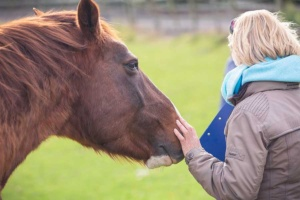 rosie withey from behind, affectionately touching a brown horse on the nose