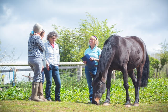Rosie is chatting with NOW Programme attendees while a liver chestnut horse grazes calmly next to them.