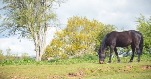 Pony peacefully grazing in the beautiful countryside